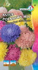 Aster peoniowy mix