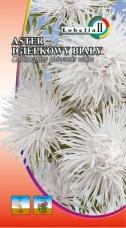 Aster igiełkowy biały