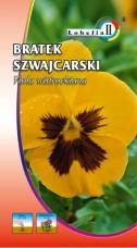Bratek Szwajcarski Żółty z Czarną Plamą