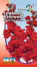 Lewkonia Letnia Czerwona