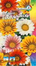 Gazania mix