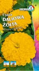 Cynia Daliowa Żółta