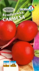 Rzodkiewka Carmesa