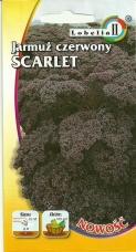 Jarmuż Scarlet